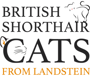 British-Shorthair Cats from Landstein
